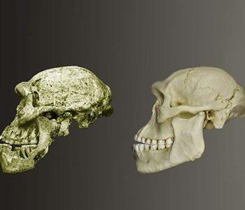 Выставка «17 черепов и зуб, или изменение человека во времени»